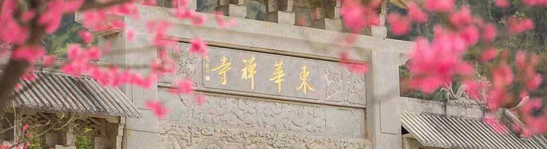 最美农禅:东华禅寺种花生 僧众出坡于天地间