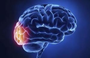 引起脑膜炎的原因有什么 脑膜炎有什么症状