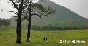 """济南华山""""三棵树""""成网红拍照地,有网友发现神似一幅名画……"""