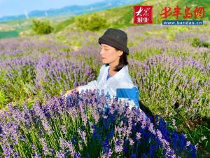 三千亩紫色花海开出一条产业链——恒信·薰衣草特色小镇的乡村振兴之路