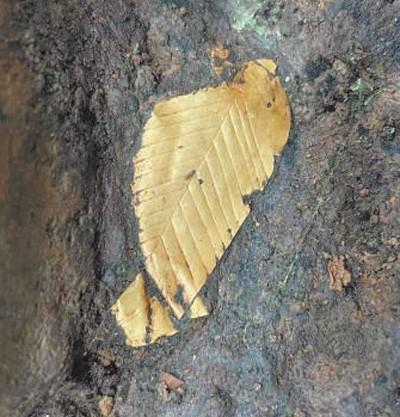 8号坑出土的之前从未见过的黄金树叶。