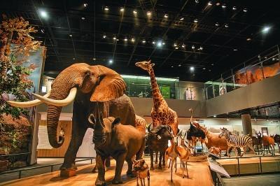 一份新年大礼 在浙江自然博物院领略自然壮美