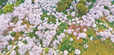 武汉重启一周年:英雄城市日日新