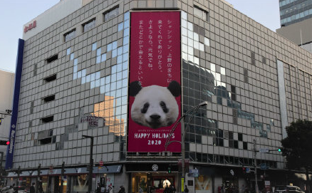 """大熊猫""""香香""""要回国找对象啦 这排面也忒大了"""