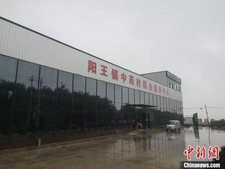 道地远志发源地产业蝶变 山西省新绛扬中药材之长谋共同致富!
