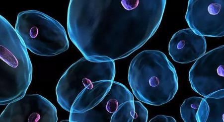 干细胞外泌体:基因抗衰,让逆生长成为可能!