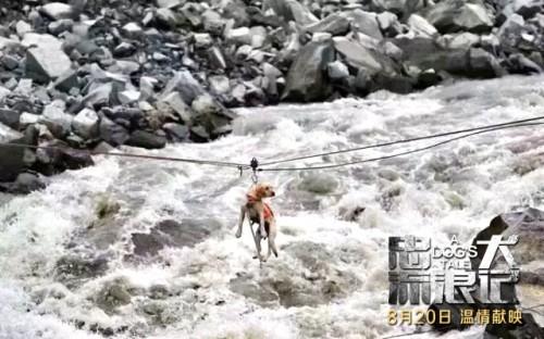 《忠犬流浪记》8月20日全国公映 搜救犬叮当真实原型改编引期待