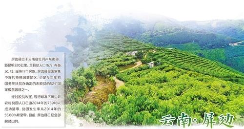 云南屏边:特色资源变致富产业