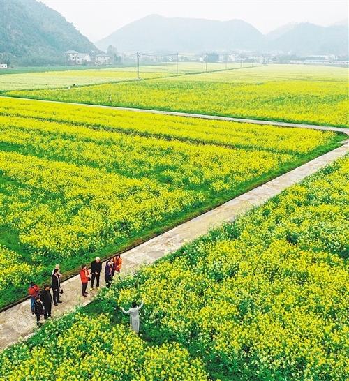 绿色,浙江发展最动人的色彩