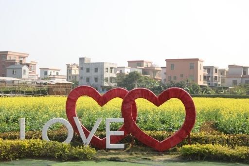 @广州市民 南沙区东涌镇百亩油菜花正开放,一起来打卡吧!
