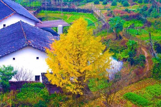 摆脱同质化,休闲农业和乡村旅游如何盈利?