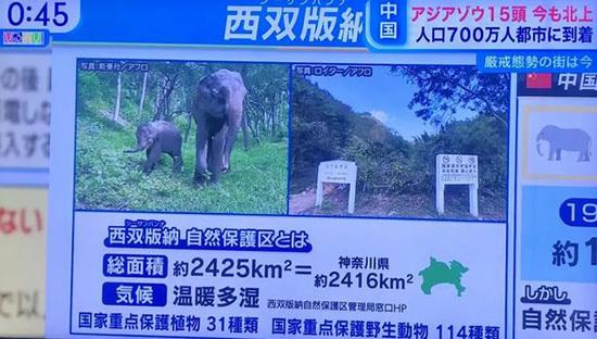 进击的巨象!云南北迁野象群红到了日本