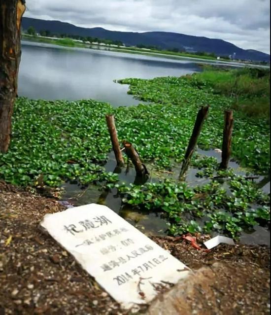 杞麓湖水葫芦泛滥。图源:生态环境部