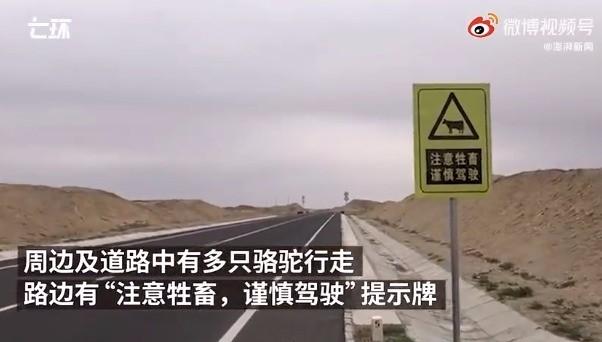 探访于月仙车祸现场:有注意牲畜标志 路上仍有骆驼