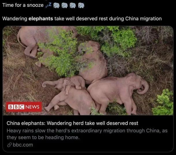 游荡的中国象群在小憩。/BBC报道截图