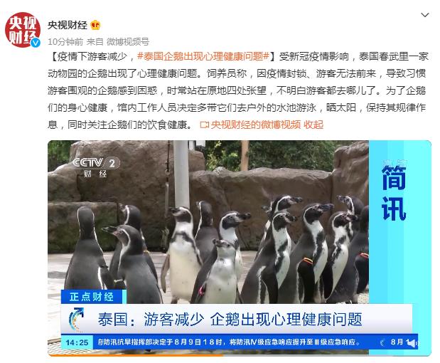 疫情下游客减少,泰国企鹅出现心理健康问题