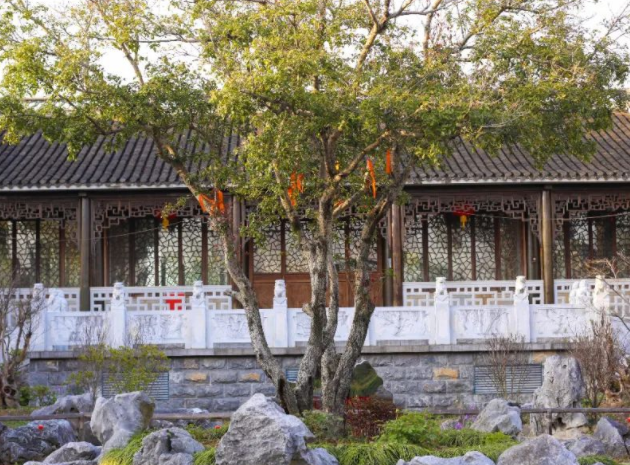 一棵树价值4000万!扬州发现一个私家园林,里面造了个小宏村