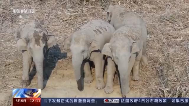 赣州新闻野象群为何北迁?记者带你探访北迁象群原栖息地