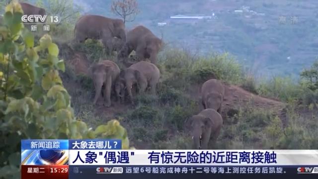 象群进入峨山县,首次监测到象宝宝吃奶珍贵画面