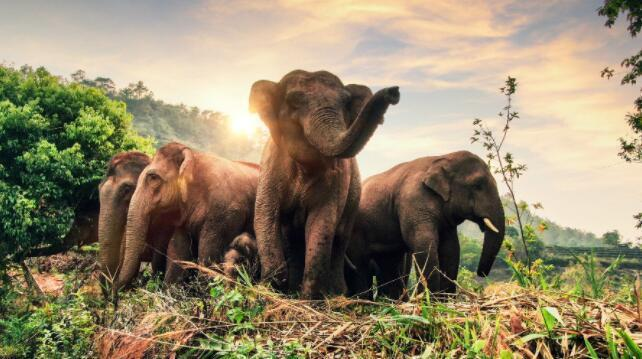 六问亚洲象北移 专家预计象群回家时间大约在冬季