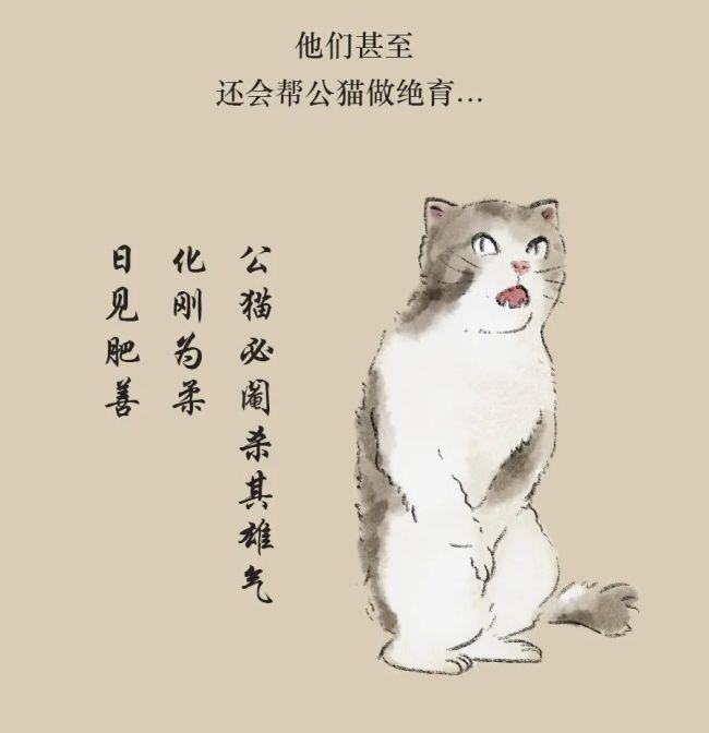 《古人养猫图鉴》:清代少女撸猫手记