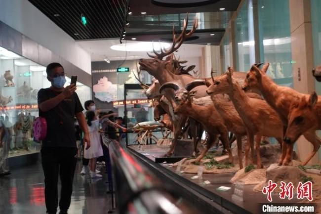 观众在拍摄国家动物博物馆内展品。郝凌宇 摄