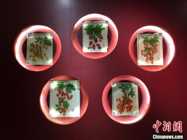 """80余件""""荔枝""""展品亮相重庆文化宴带着科普味"""