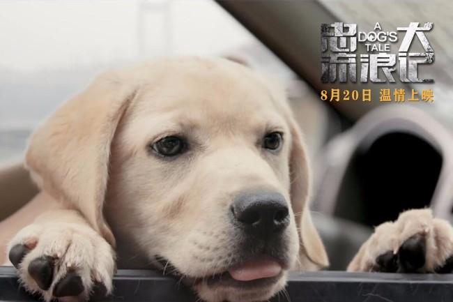 中国版忠犬八公 电影《忠犬流浪记》定档8月20日