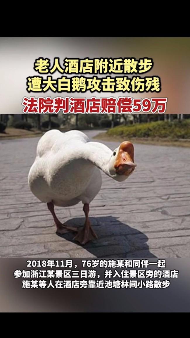 """为何""""鹅""""式攻击如此厉害?老人散步时被两只大白鹅攻击致残"""