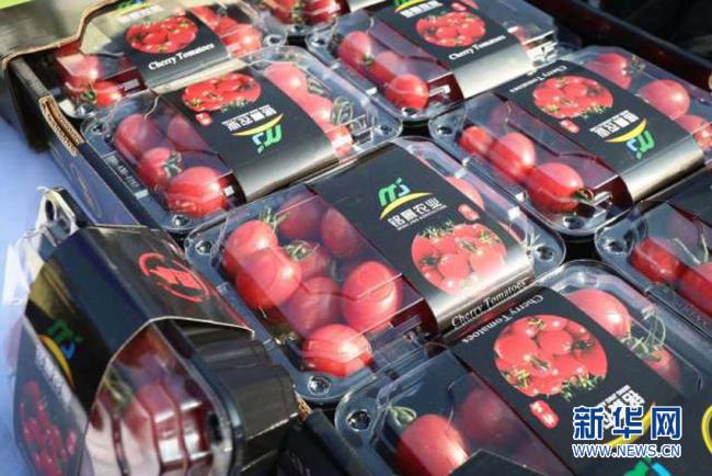 湛江遂溪江头村1200亩圣女果四个月收入超5000万元 数量还在持续累计中