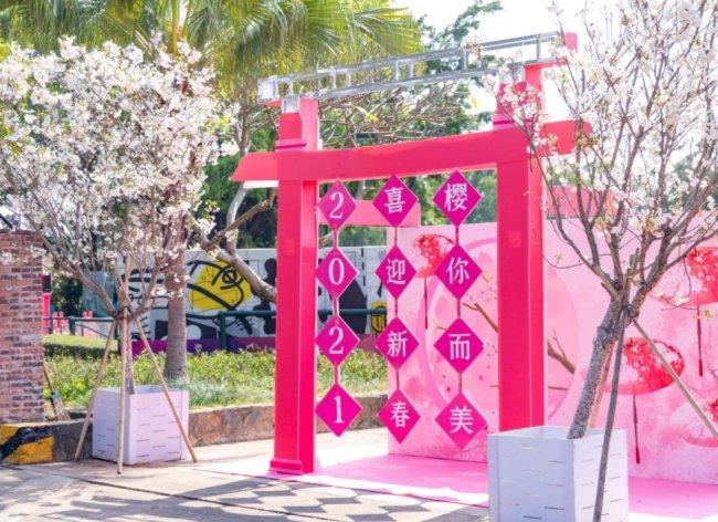 2021深圳观澜湖樱花节正在举办中 梦幻粉色海洋点缀大地生态艺术园