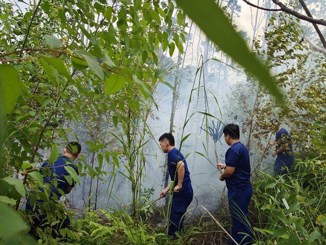 惠阳一男子上山因火烧马蜂窝引发森林火灾 公安机关依法治安拘留10日