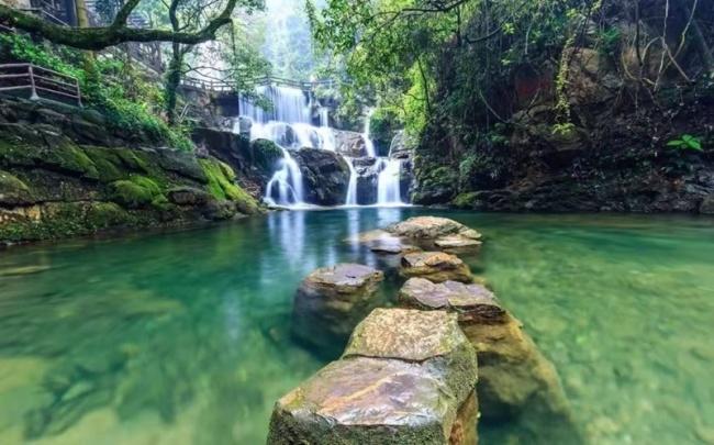 肇庆鼎湖山自然保护区新物种新记录不断涌现 季风常绿阔叶林面积增加50%