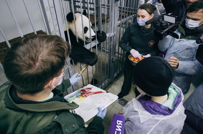 俄罗斯重病男孩许愿拥抱熊猫 总统普京助其圆梦