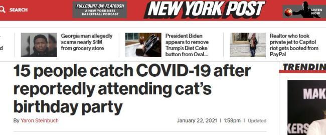 外媒:智利15人参加猫咪生日派对后感染新冠