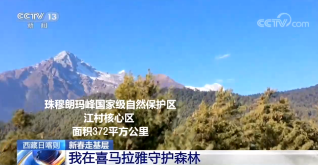 【新春走基层】西藏日喀则:我在喜马拉雅守护森林
