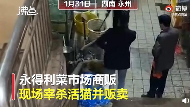 湖南永州市场卖现宰活猫,网友:无法接受!