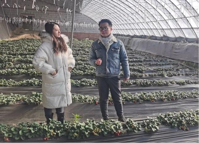 第一视频村播365直播团队走进产业园直播讲解草莓种植情况