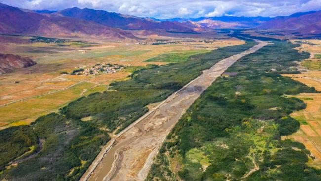 新华全媒+|沙棘传奇——西藏隆子跨越半个世纪的生态革命