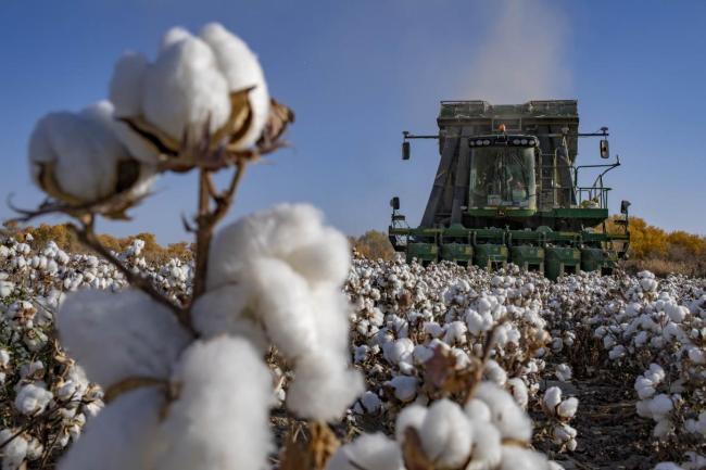 休想抹黑!关于新疆棉花的6个事实
