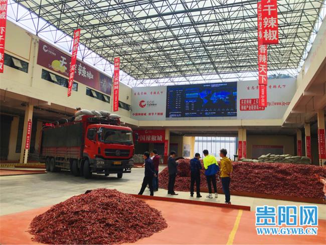 【民族要复兴 乡村必振兴】贵州遵义:火红的辣椒映出红红火火的日子