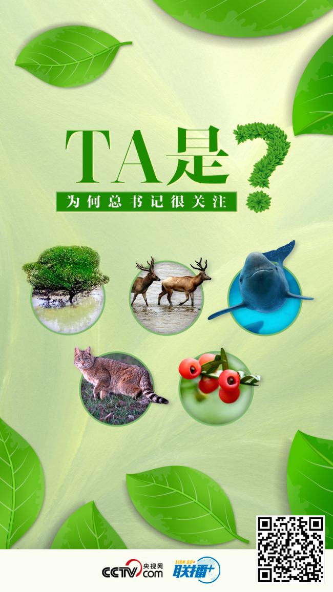 互动海报丨TA是?为何总书记很关注