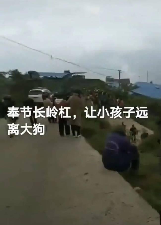 重庆8岁男童上学途中被狗咬死 狗主人已被控制