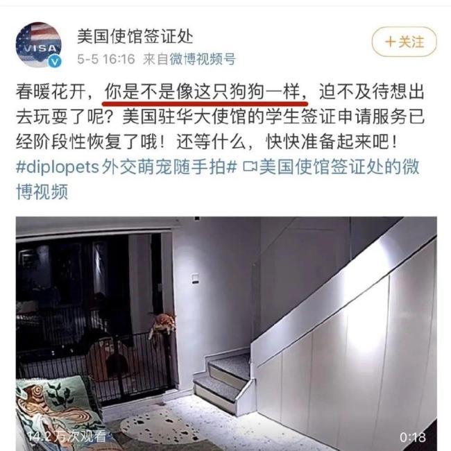 晚报 美国驻华使馆道歉 第二只金钱豹被麻醉捕获