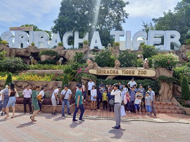 受疫情影响 泰国动物园出售11头会跳舞按摩的大象