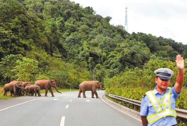 西双版纳抓实生态环境保护——人象共生 和谐家园