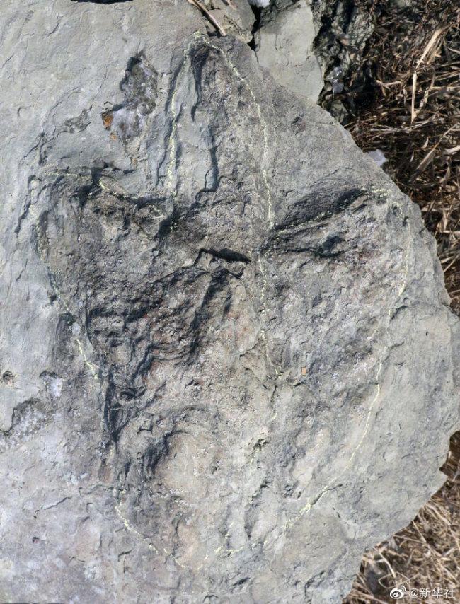 陕西延安发现侏罗纪肉食龙足迹(图)