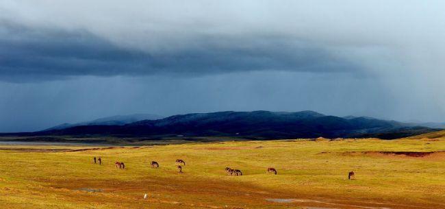 青藏高原可可西里地区再现长百米的巨大露天垃圾带