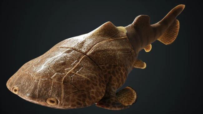 重大发现!我们的下巴和牙齿可能起源于这条鱼(图)