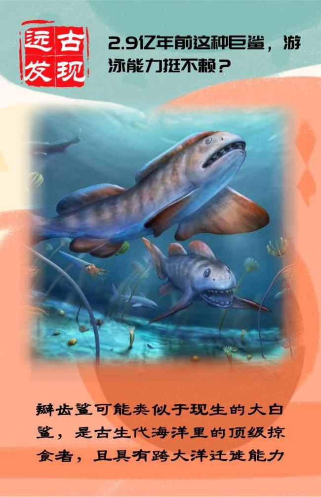 我国首次发现2.9亿年前瓣齿鲨化石